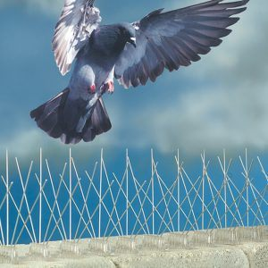 stainless-steel-pigeon-spikes